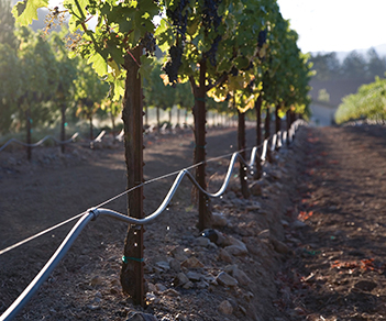 sfv_vineyard19_irrigation
